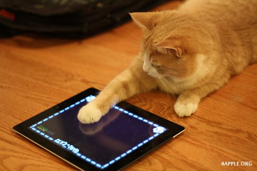 1339845684_cat-playing-ipad