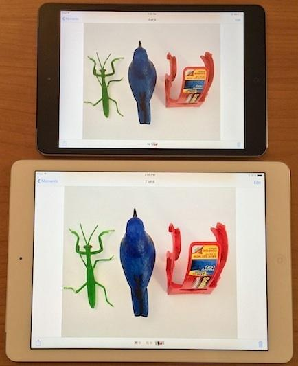 1385027440_bird-comparison-small-3