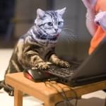 Игры для ваших котов на iPad