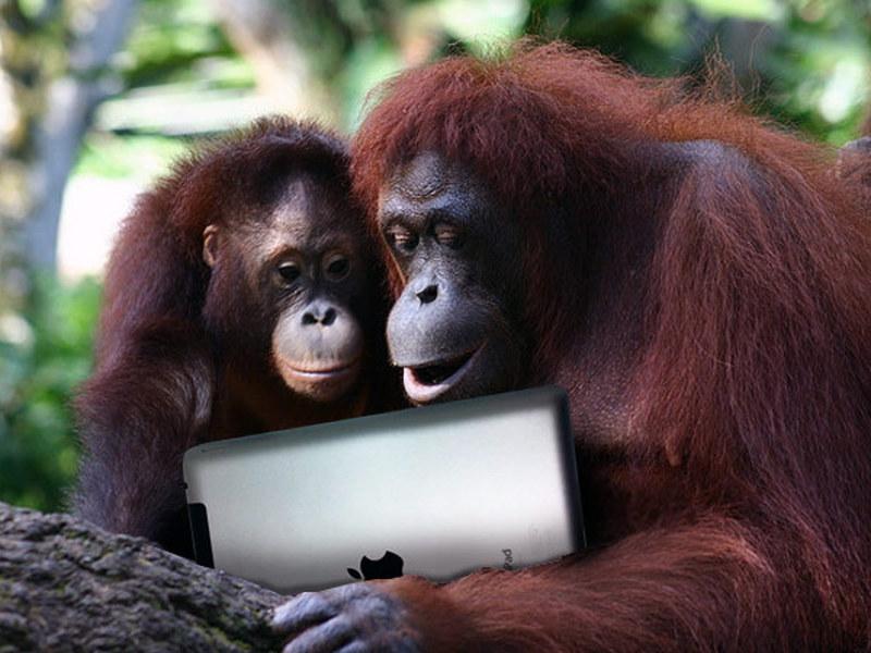 iPad для орангутанга